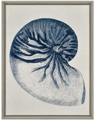 Coastal III - Nautilus