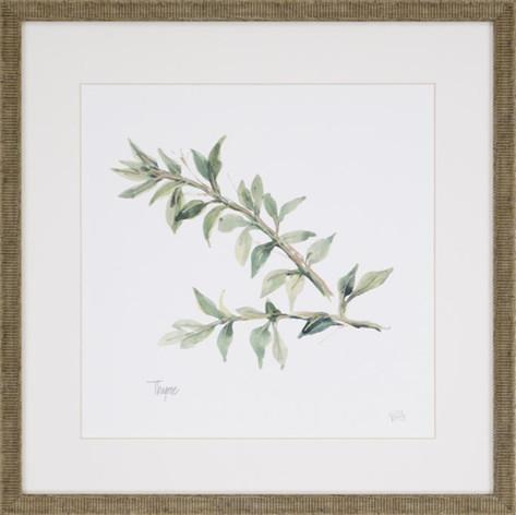Watercolor Herb Print - Thyme