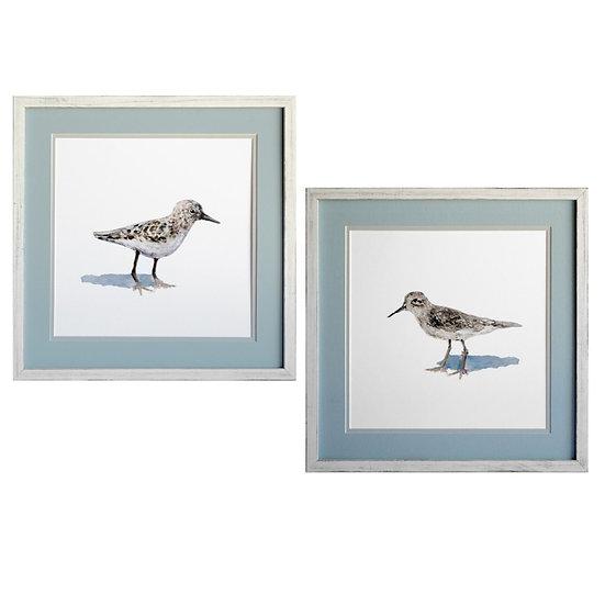 Framed coastal wall art of sandpiper illustrations