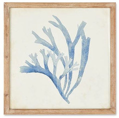 Blue Coral III