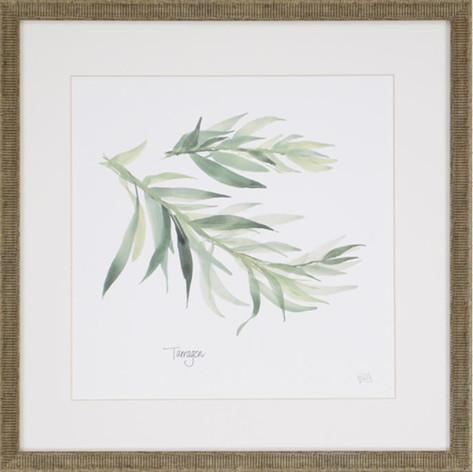 Watercolor Herb Print - Tarragon