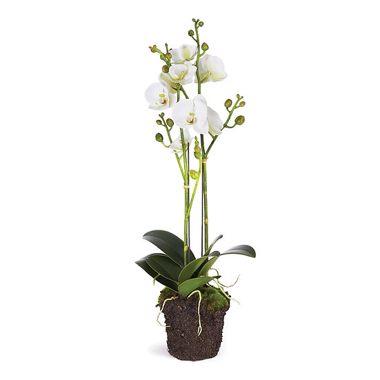 23 inch tall faux orchid plant in white with double the buds