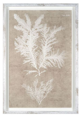 Nature on Linen IV