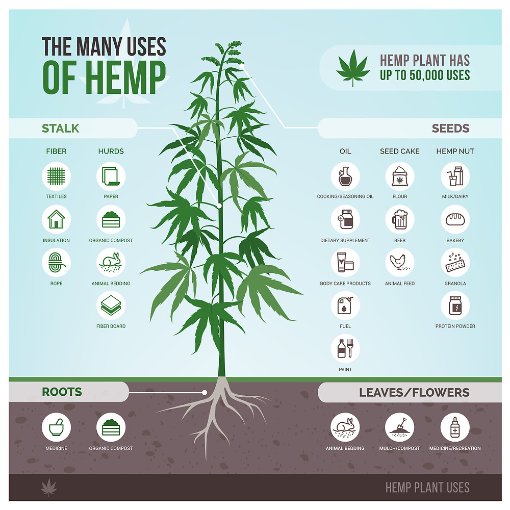 Infographic Showing the Many Uses of the Hemp Plant