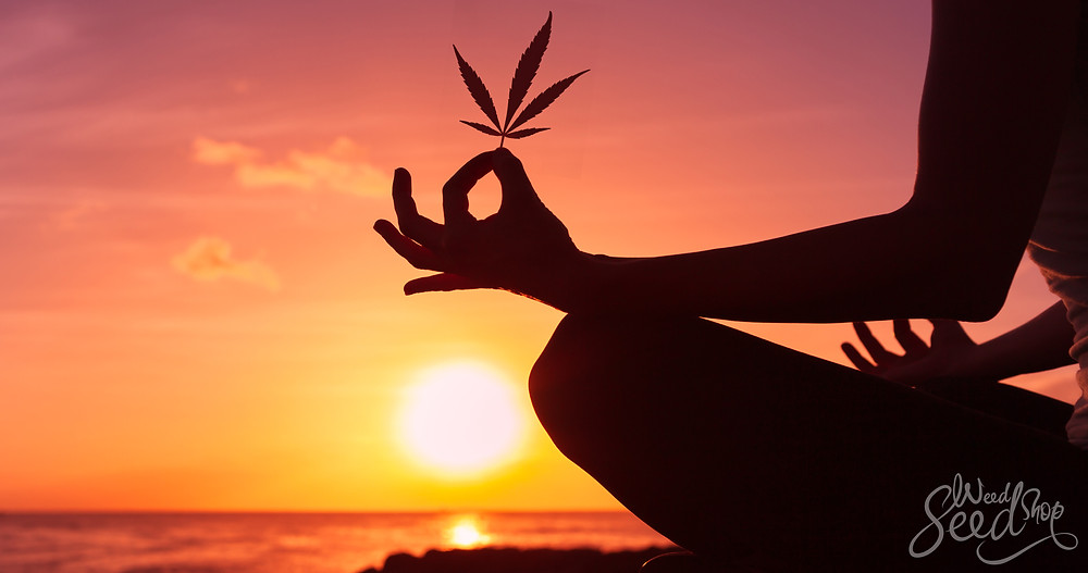 Person Meditating at Sunset with a Marijuana Leaf in Hand
