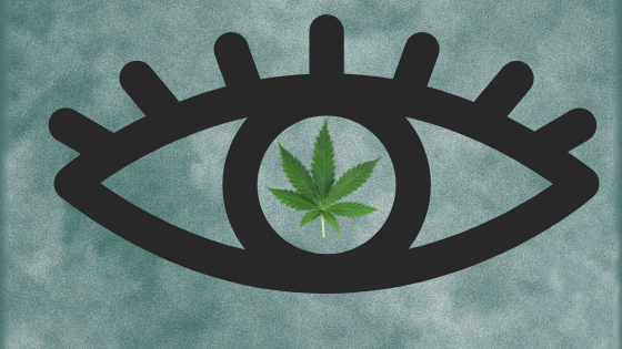 a photo of the outline of an eye with the pupil replaced with a marijuana leaf with a foggy background to represent the pressure and pain associated with glaucoma