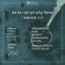 What is beta-caryophyllene? | Ohio Marijuana Card