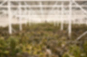 Buckeye Relief Cultivation Facility.jpg