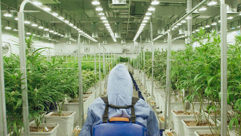 Green Thumb Industries Cultivation Facility