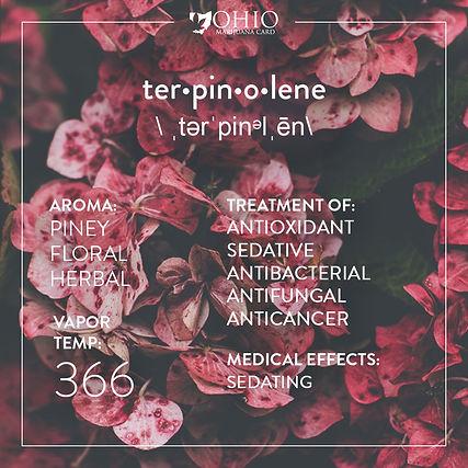 What is terpinolene? | Ohio Marijuana Card