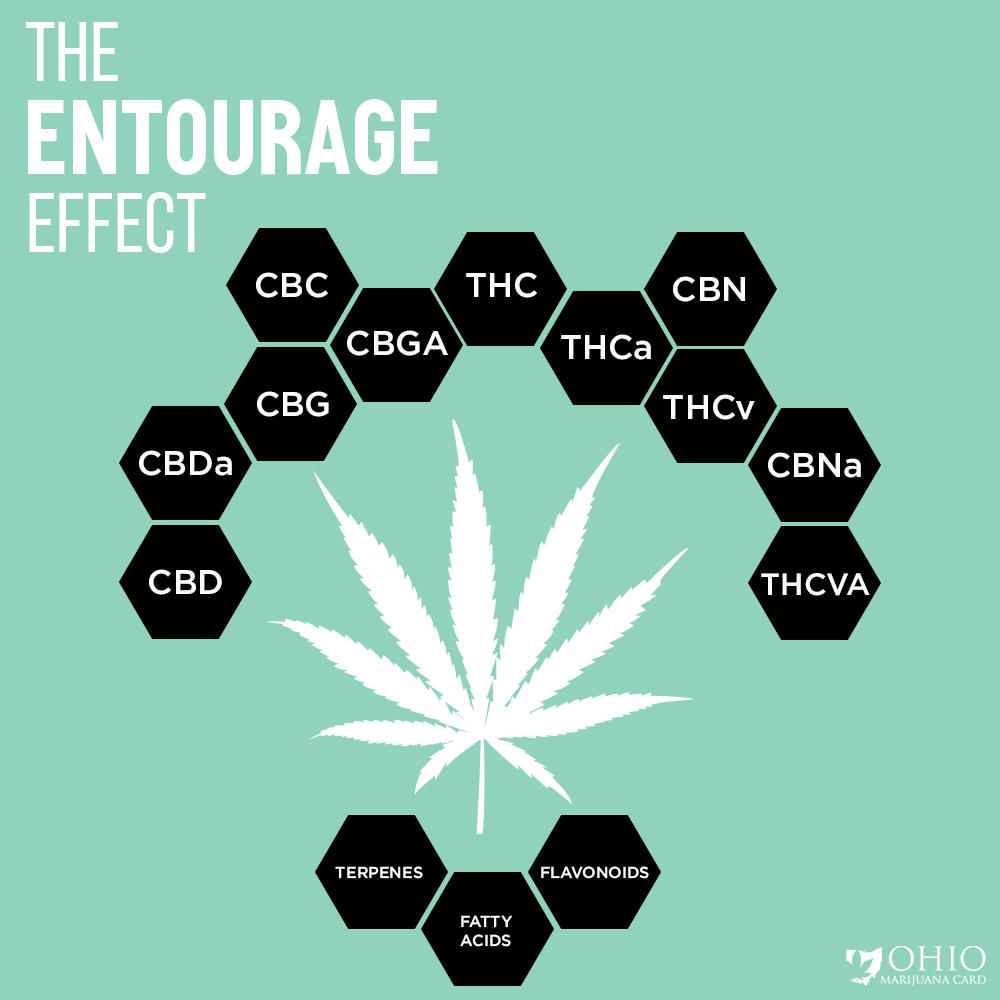 The Entourage Effect Includes Cannabinoids, Terpenes, and Botanical Compounds