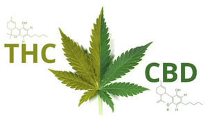a marijuana leaf with two different colors of green to show the split between CBD and THC and how they work together to form one singular leaf.