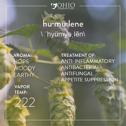 What is humulene? | Ohio Marijuana Card