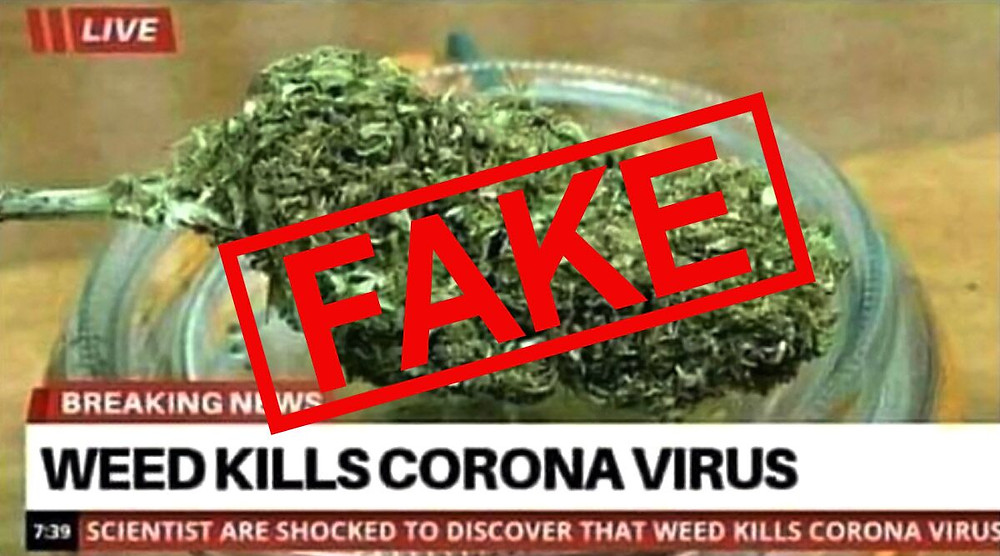 A photo of a news headline falsely claiming cannabis is a cure for the coronavirus.