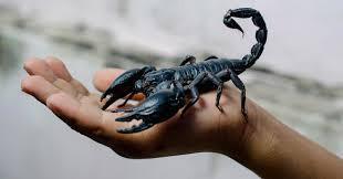 Le Sage et le Scorpion