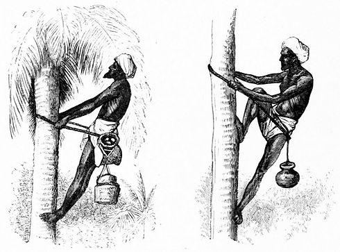 Palm_Wine_Drawers_1870_India.jpg