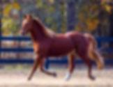 equestrian artist.jpg