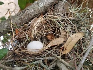 Dove_Nest.jpg