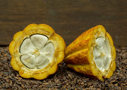 Cut open cocoa pods on cocoa nibs