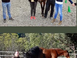 Conectando con nuestras emociones junto a los caballos