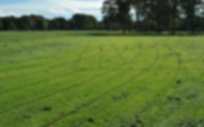 Running Track.jpg
