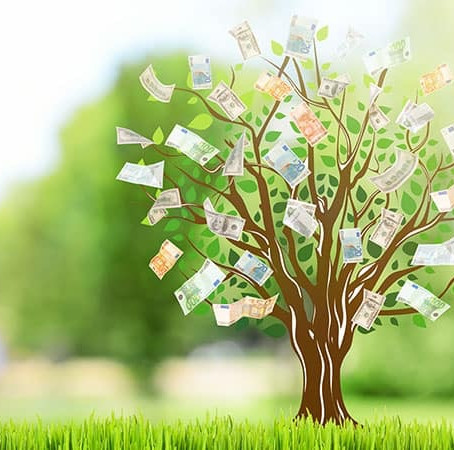 Are money trees the perfect place for shade?