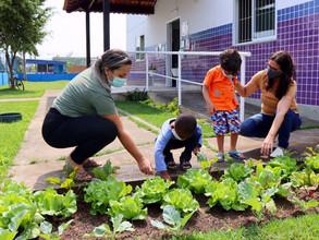 Projeto Horta na Escola na Creche Irmã Dulce colhe sonho plantado