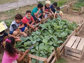 Horta Comunitária Agroecológica Pedagógica anexa à Escola de Farol