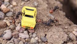 Ants Mico Car