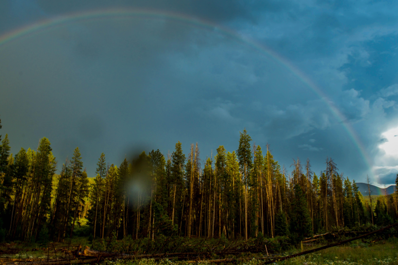 Rainbow Tree Line