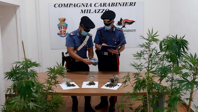 >47enne di Santa Lucia del Mela coltiva cannabis nel suo terreno, arrestato in flagranza di reato <