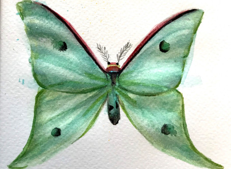 Mariposas y más bichos