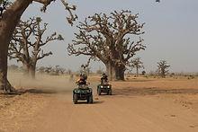 quads dans la foret de baobabs