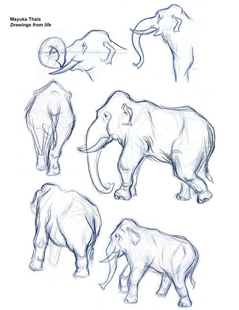 Elephant quick sketches 2005