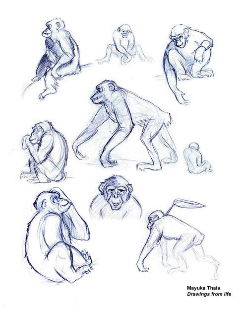 Chimpanzees 2006