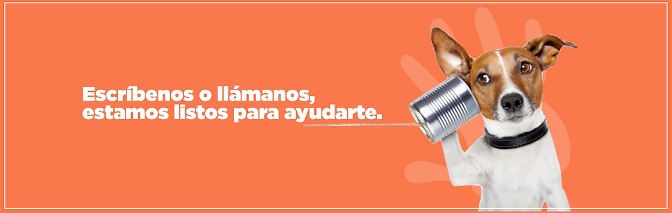 Contacto | Bogotá | MARK LEE Sabiduría Canina