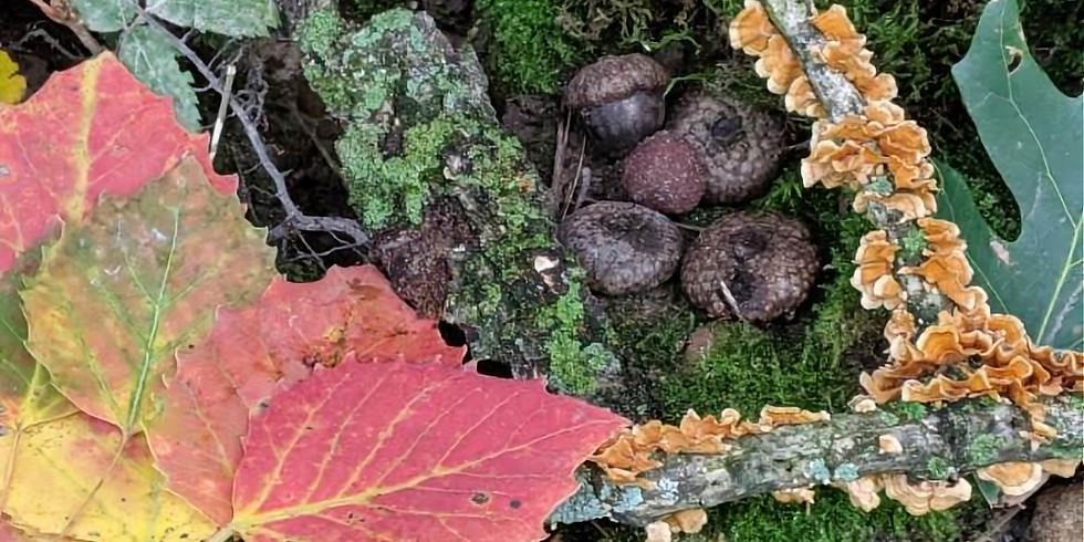 Seasonal Changes: Autumn - Storytelling