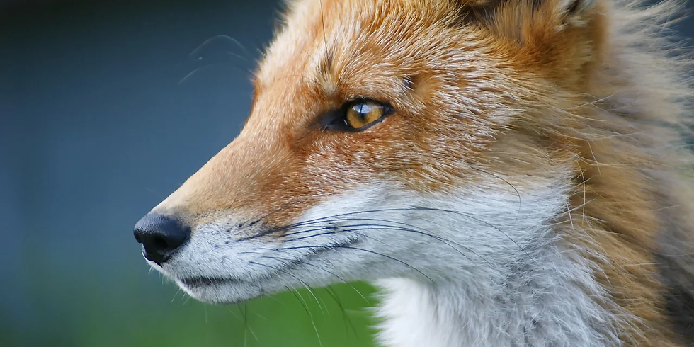 Foxy You, Foxy Me: Badass Women Sharing Their Story