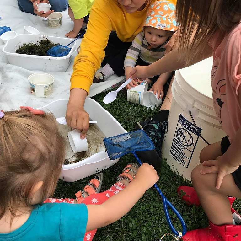 Inter-generational Pond Critters and Storytelling - FREE