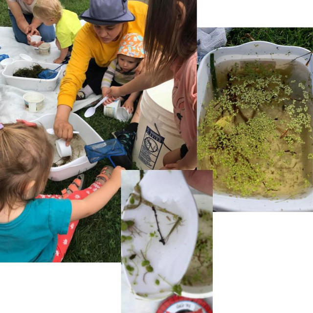 Pond Critter Discovery and Exploration