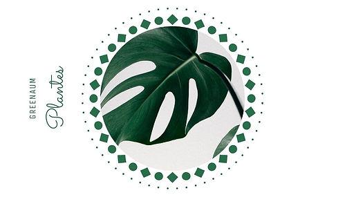 GreenAum plante.jpg