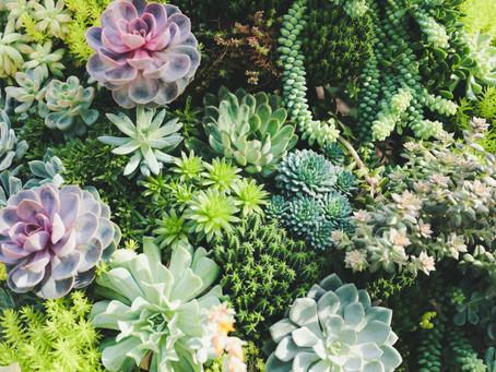 Zoom Plante : Les succulentes