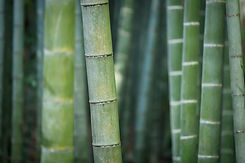 Plante verte bambou.jpg