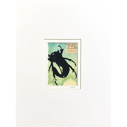 Teal Green Beetle