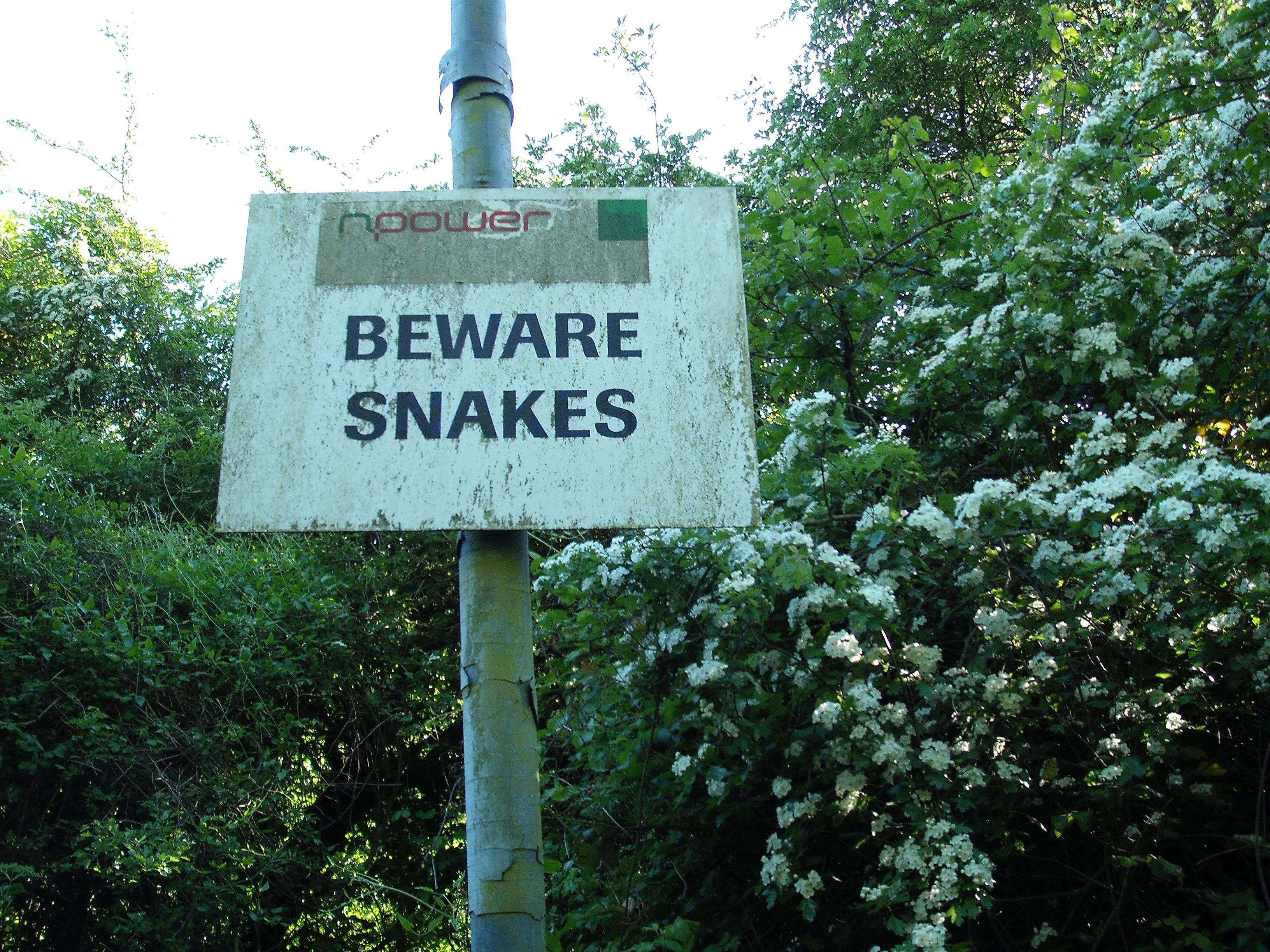 Beware snakes npower