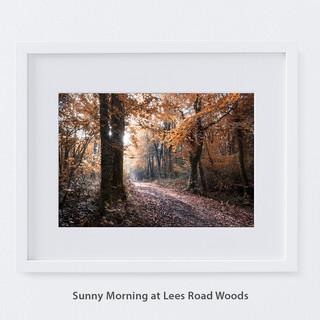 Lees Road Woods, Ennis.