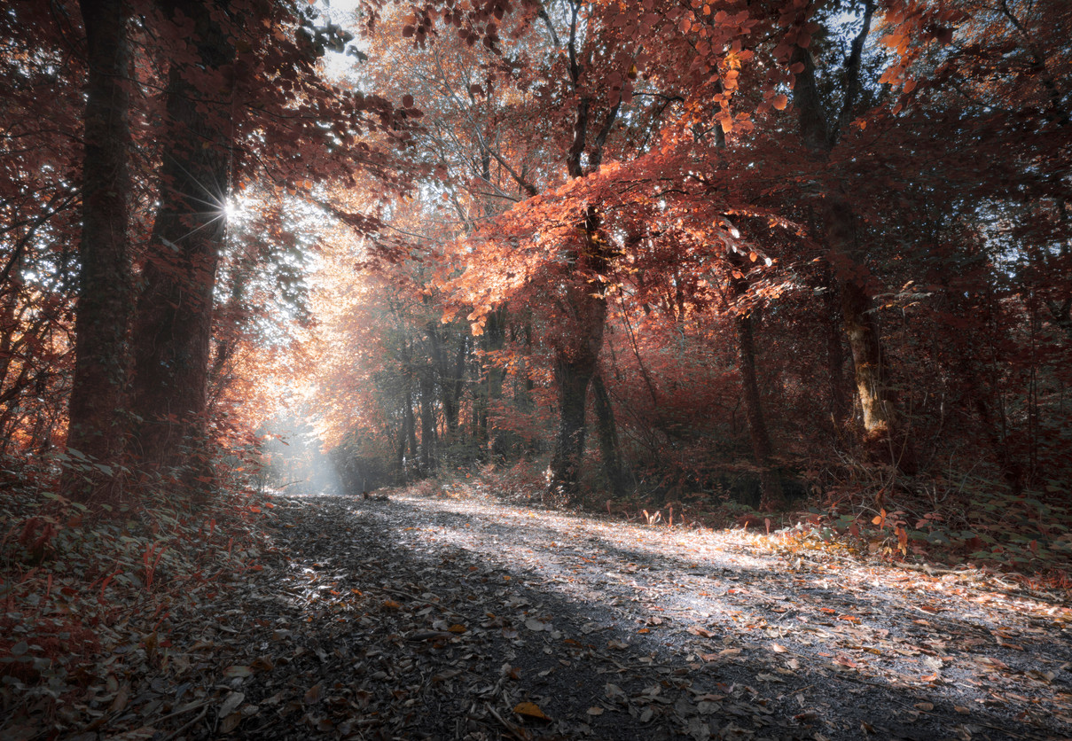 Sparkling light in the woods