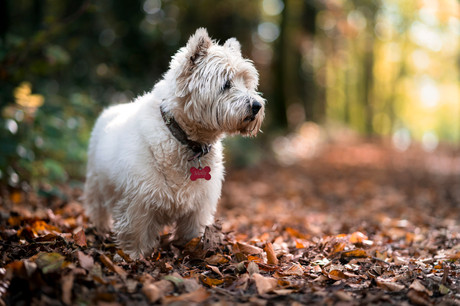Autumn stroll with Molly