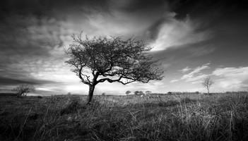 Loan Tree in Carran
