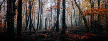 Lees road, woods, Ennis